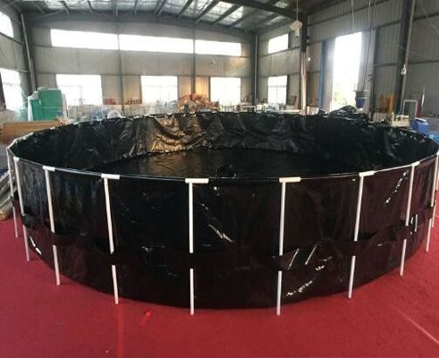 Black 6000 Gallon Fish Tank , Ornamental Fish Breeding With Steel Frame